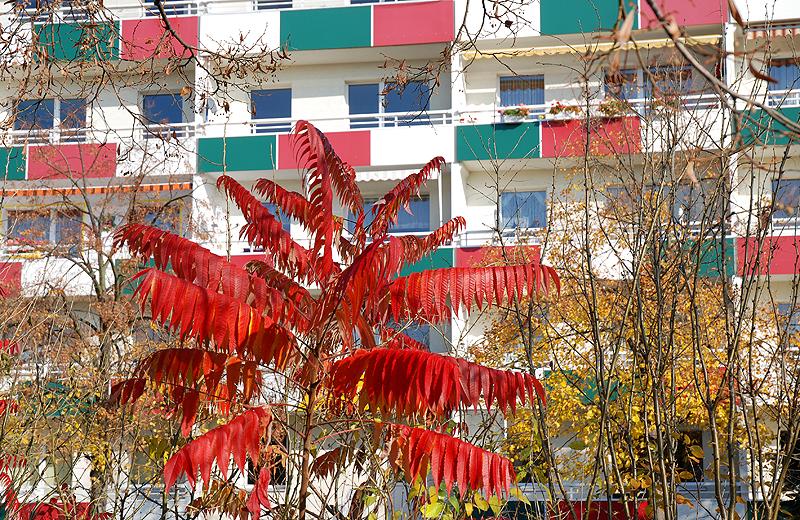 Herbstlicher Strauch bunte Neubaubalkons